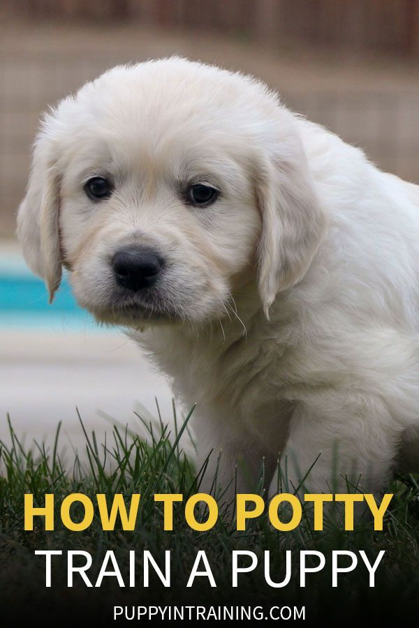 How To Stop Your Puppy From Peeing And Pooping In The House