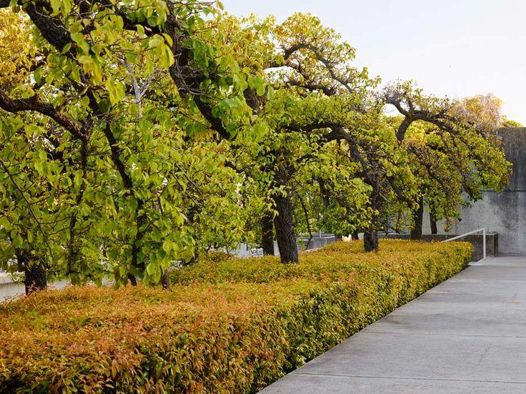 Oakland Museum Of Art, Oakland, CA | The Landscape Architecture Legacy Of  Dan Kiley