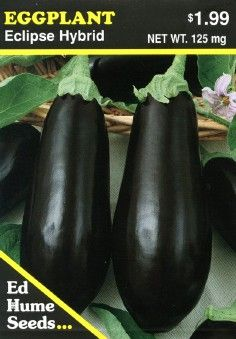EGGPLANT Eclipse    A relatively early eggplant variety, ideal for cool, short season climates. Its fruit is glossy, dark purple and a slightly elongated oval shape. Twilight is vigorous and disease resistant, yielding abundantly on a 3 foot bush. Delicious baked, fried or in casseroles, Italian and other ethnic dishes. Approximately 65 days to maturity from transplant, depending upon growing conditions.