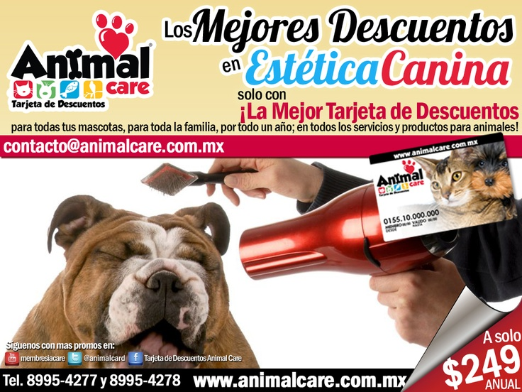 EN ESTÉTICA al presentar la TARJETA DE DESCUENTOS ANIMAL CARE obtienes los mejores descuentos del 10% al 50% en todos los servicios y productos para mascotas, con toda la RED de PROVEEDORES. Checa todos los descuentos en www.animalcare.co... Llámanos al 8995-4277 y 8995-4278 Escribenos a contacto@animalcare.com.mx