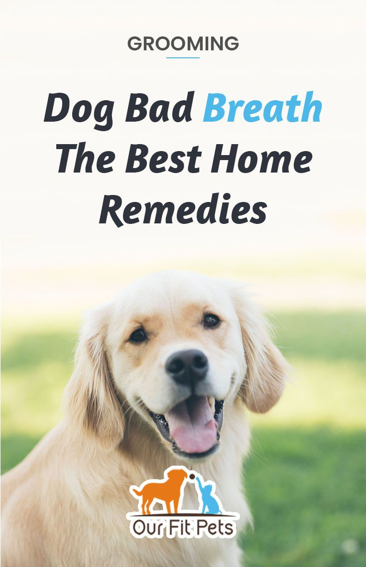 Dog Bad Breath The Best Home Remedies Our Fit Pets Bad Dog Breath Bad Breath Dog Breath