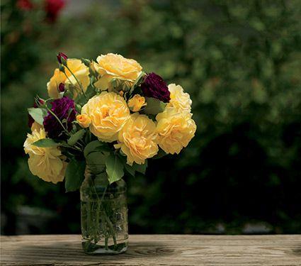 Rose Julia Child™ (floribunda rose) Hardiness Zone: 4-9 S / 4-9 W Height: 3' Fragrance: Yes Exposure: Full Sun Blooms In: June-Sept