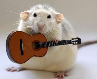 CFZ: Daily News: Meet The Rat Pack - animals who play instruments