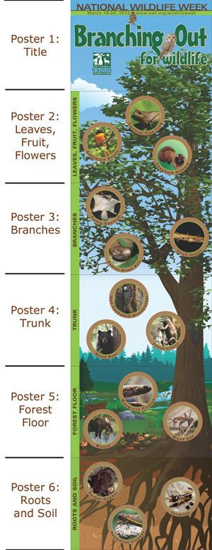 Download the free poster for National Wildlife Week! (March 18th-24th)