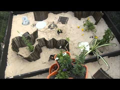World Turtle Day | Horsfield's (russian) Tortoise - Building an outdoor enclosure (part 2)
