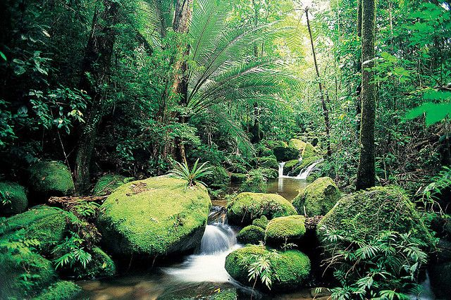 Cairns - Cape Tribulation in Australia