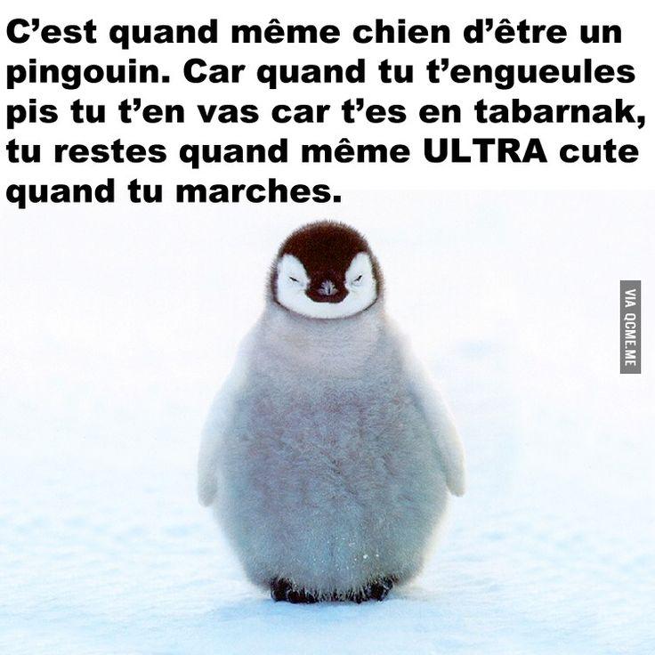Pingouin – Québec Meme + Plus