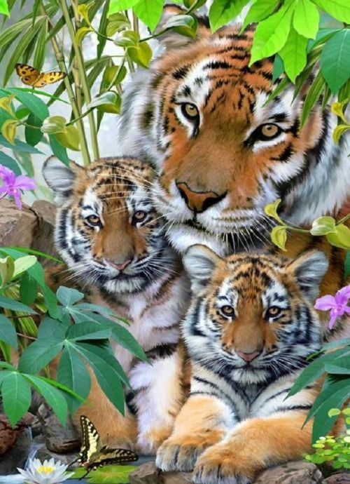 llbwwb:  Todays Cuteness:) Tiger family by Picturegirl.