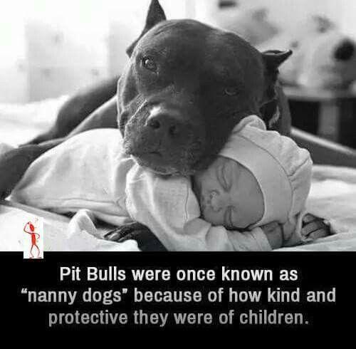 Pitbull fact