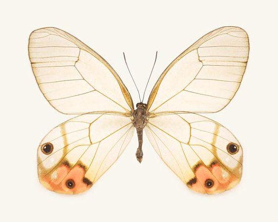 He encontrado este interesante anuncio de Etsy en https://www.etsy.com/es/listing/110526908/butterfly-art-insect-art-butterfly-print