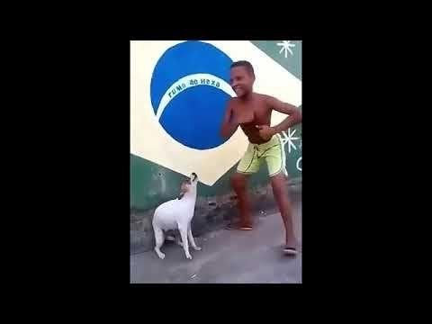 Meme Perro Llorando Youtube Perro Bailando Ninos Bailando Perros