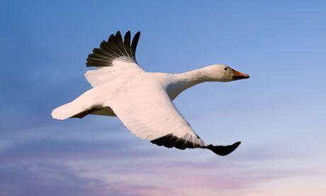 The Snow goose BBC dramatisation