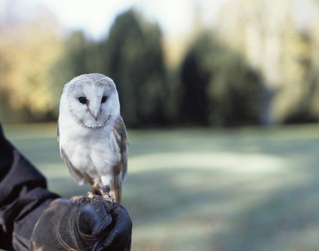 Owl 57 57 best Owls. Hoo? Owl...