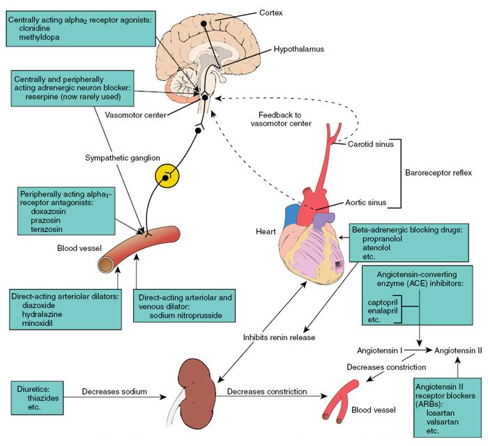 Antihypertensives | Tintinalli's Emergency Medicine: A ...