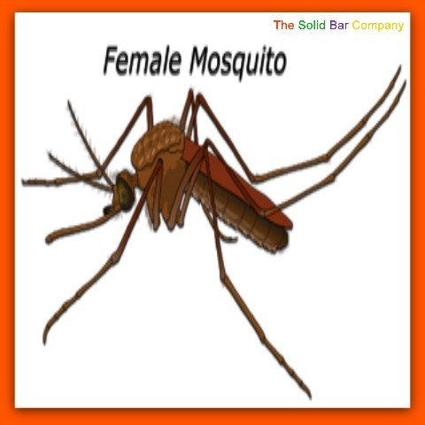 Being able tell the difference could be invaluable - but why?  Because only female mosquitoes have the mouth parts necessary for sucking blood. They are the ones that give you the 'bites'.  Not a good thing!  For the female mosquito you need the best repellents from The Solid Bar Company