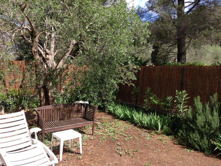 corner of garden with olive treee