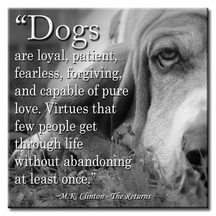 "You Get Life Once Quotes: ""Dogs Are Loyal, Patient, Fearless, Forgiving, And Capable"
