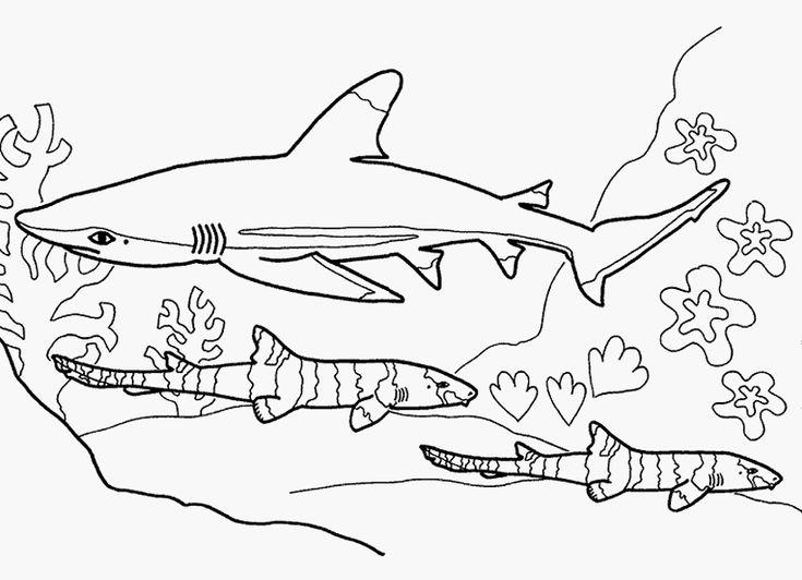 Ausmalbilder Hai Kostenlos 920 Malvorlage Alle