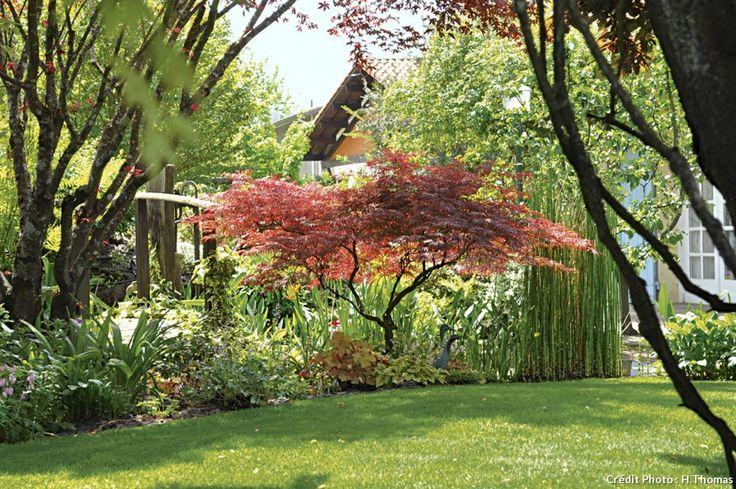 Les 25 meilleures id es de la cat gorie arbres pourpres en for Arbustes pour jardin anglais