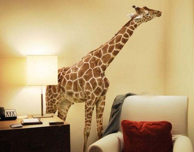 Wandtattoo No.316 Naschende Giraffe Flecken Afrika Savanne Tier Safari Größe 192cm x 144cm  Wandtattoo Giraffe No.316 Naschende Giraffe  Wandtattoo-Material:   - Folie: selbstklebende...