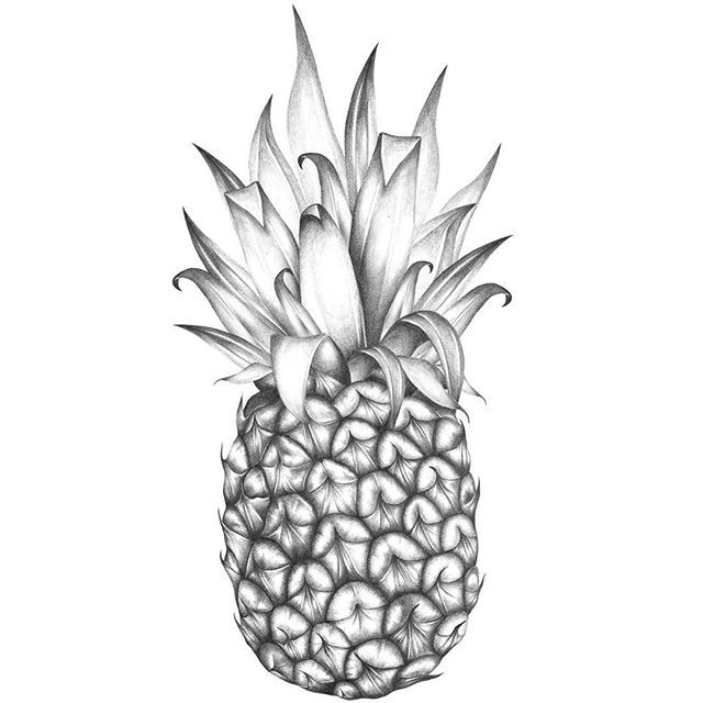 how to draw a pineapple youtube