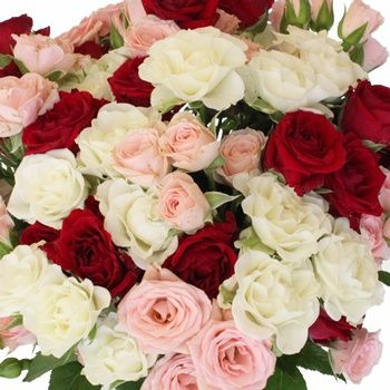 Valentine's Latin Lovers Petite Rose Mix - Show your sweetheart your sensual side with our alluring Valentine's Latin Lovers Petite Rose Mix. This pack features spray roses, which are small, petite rose buds with three to five blooms per stem. The classic Valentines mix of white, red, and pink roses are all included, which is a perfect way to show your lover how passionate you feel for them.