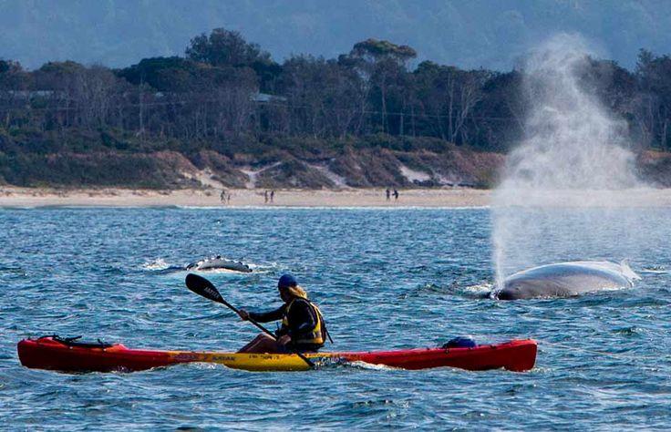 Go Sea Kayaks