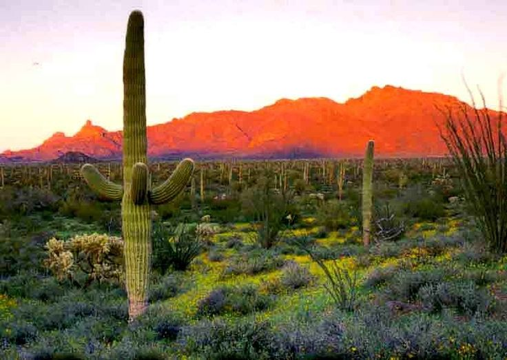 <b>Arizona is home to some 6.5 million people.</b> Even though the…
