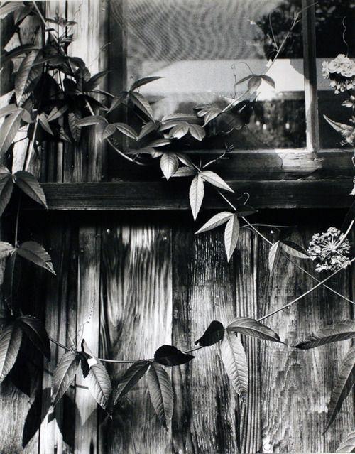 Windows and Vines 1952,Brett WestonAwesome Photos, Photography B W