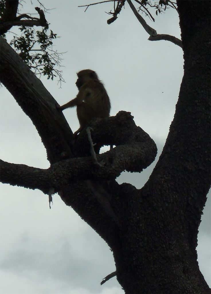 Mikumi National Park & Udzungwa Rain Forest Safari. http://bit.ly/tanzanasafaritours?utm_content=buffer68e70&utm_medium=social&utm_source=pinterest.com&utm_campaign=buffer