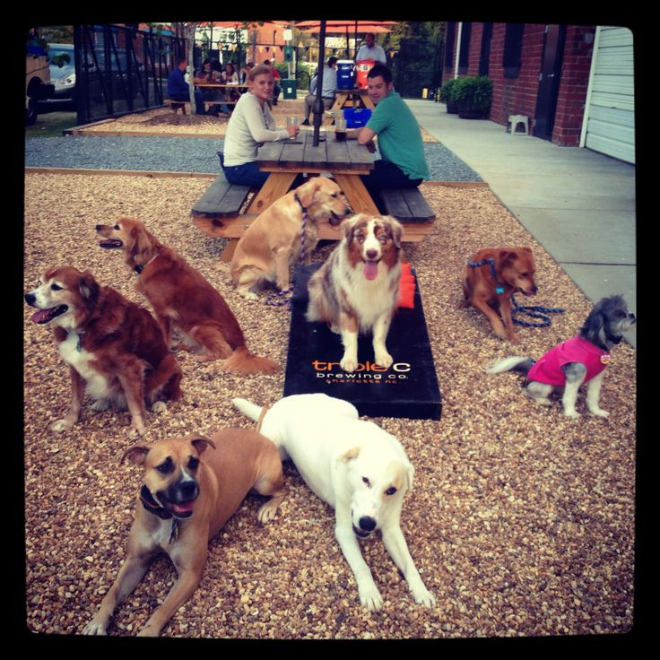 Dog friendly businesses, shops, restaurants and swimming areas Charlotte NC. Check them out and call us for dog training in Ballantyne, Waxhaw and more.