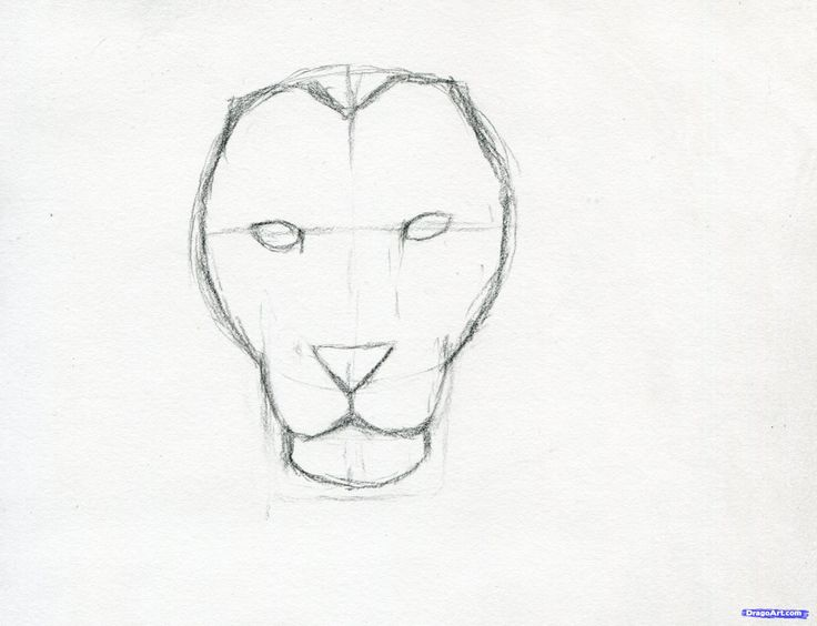 how to sketch a lion step 6