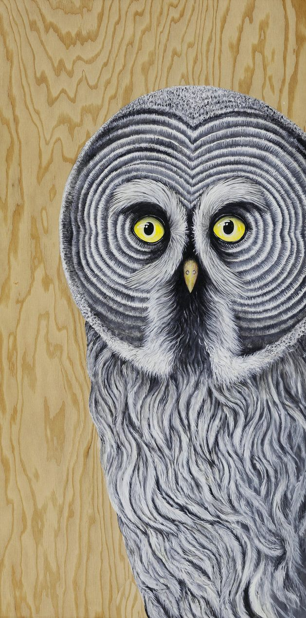 Great Grey Owl by Skee Goedhart