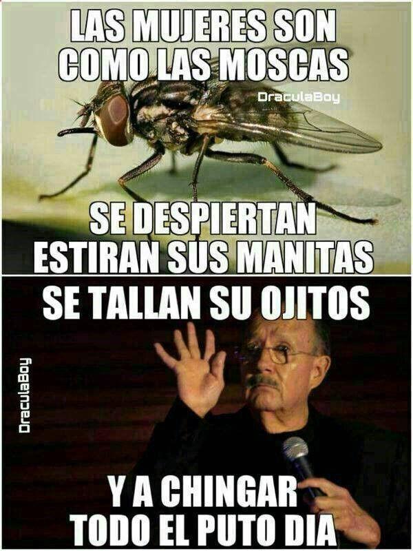 #animallovers #funnyvideos #mosquito #pets #animals ➛➛ http://www.diverint.com/memes-espanol-matricula-premonitoria