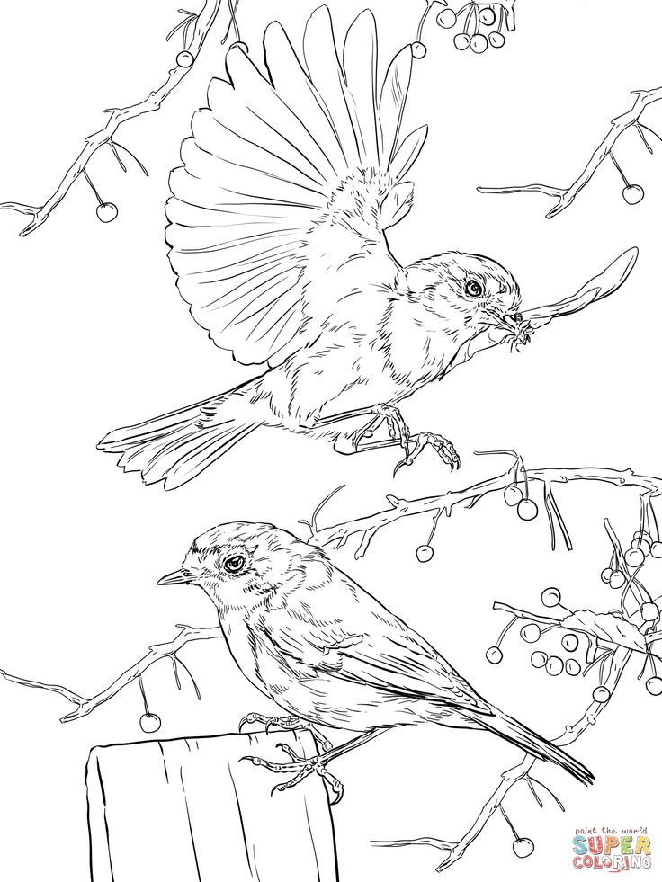 260 best images about Bird Coloring Pages on Pinterest