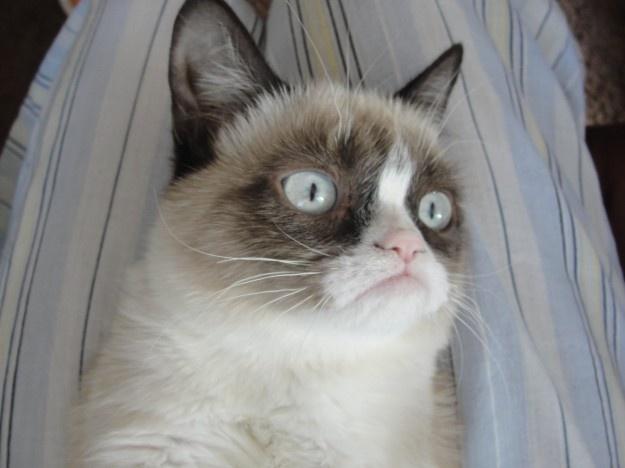 Good night Grumpy Cat ...