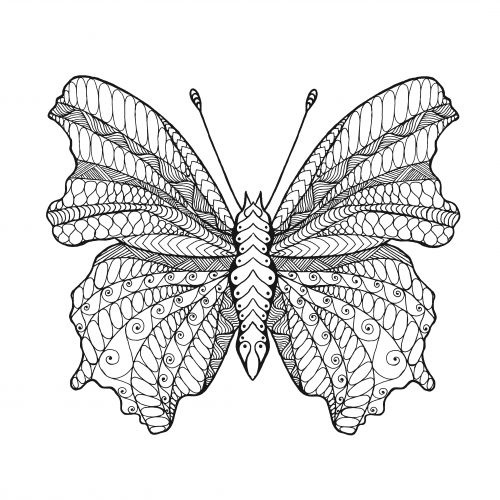 adult coloring beauty with wings - Advanced Coloring Pages Butterfly