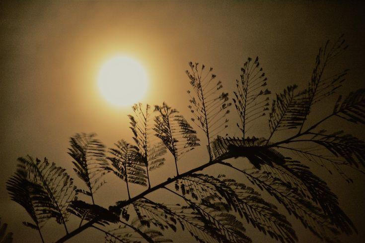 M  o   m   e   n   t   s   b   o   o   k   .   c   o   m: Διύλιση φωτός κι ανέμου ζάλη ...