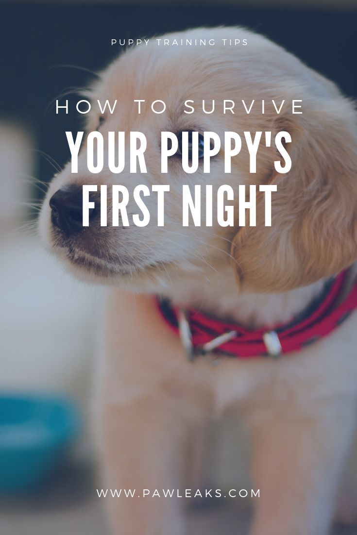 How To Survive Your Puppy S First Night At Home First Night With