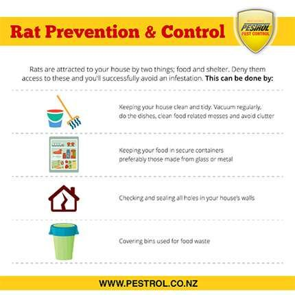 Rats – Control In Your Home