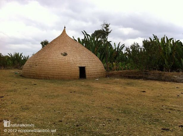 This is a traditional split bamboo plaited roundhouse by the Sidama people of Ethiopia. The dome, with its pointy top, is designed to shed heavy rainfall where a circular dome would have a flat region prone to leaks. Bamboo once played an important role in the rural economies of East Africa but indiscriminate clearing of natural bamboo forests have resulted in loosing natural resources and many of the traditional building skills. You can find out more about traditional bamboo construction…