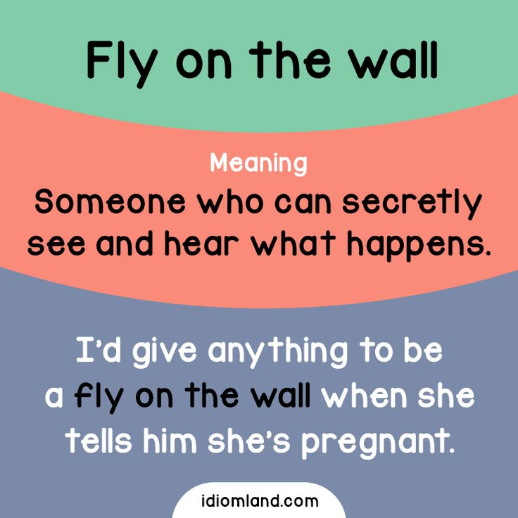 Idiom of the day: Fly on the wall. Meaning: Someone who can secretly see and hear what happens. #idiom #idioms #english #learnenglish