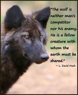 Black Wolf: