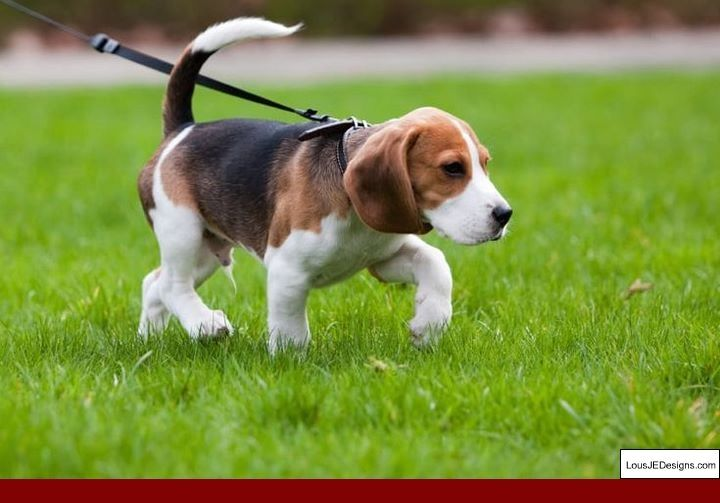 Training Tips For Dogs That Pull And Pics Of Dog Potty Training