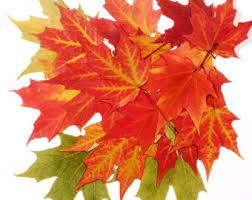 Image result for pressing autumn leaves to frame