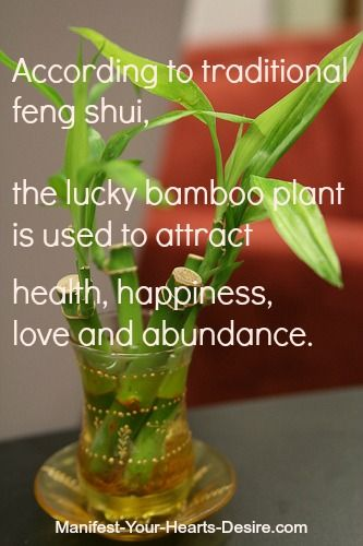 http://zti.me/oKx  #Feng Shui Tip of the Day Jan 15 2013 #Lucky #Bamboo Plant