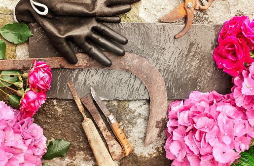 gardening set with flowers and vintage tools over stone - foto stock