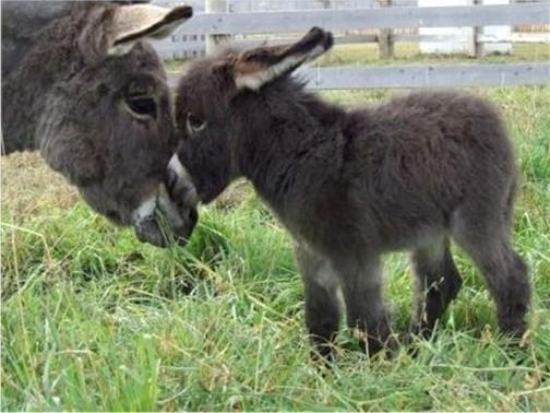 Awe Baby Donkey Love