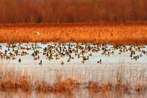 When you search for duck hunting land for sale or lease in Texas, be open to any areas where duck may be found, even if the property isn't being sold.