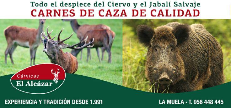Si os gusta la carne de caza y de calidad en Cárnicas El Alcázar tenemos todo el despiece del Ciervo y del Jabalí Salvaje. Todas nuestras carnes de caza provienen de animales salvajes, y no alimentados en granja. Son de primera calidad, natural y libre de añadidos.